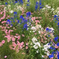 ガーデン散策…また白とブルー