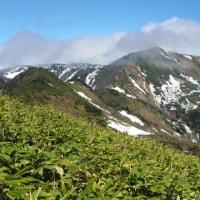 白砂山 残雪とシラネアオイに出会えた山旅
