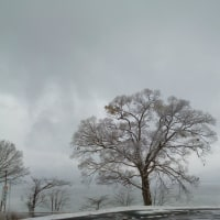 田沢湖畔も雪化粧♪