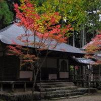 「京都古社寺探訪」高山寺・、京都市右京区梅ヶ畑栂尾(とがのお)町にある寺院。栂尾は京都市街北西の山中に位置する。高山寺は山号を栂尾