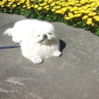 お庭に咲いたワン