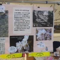 跡見学園女子大学新座キャンパス桜まつり