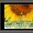 向日葵の点滴