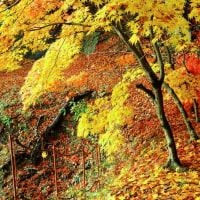 陣屋の杜公園の落葉が綺麗です (福島県伊達郡桑折町)