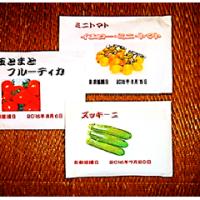 夏野菜 種 の 直播き 開始 - 3