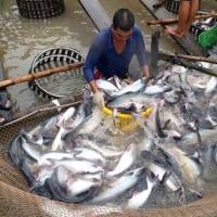議会で漁業林業について討議  ベトナム