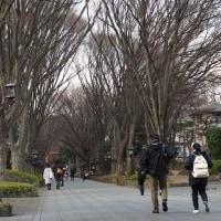 散歩コースの春