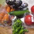 無人販売の野菜達