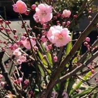 春の香りの中で
