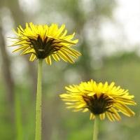 野の花・・その2