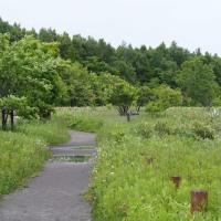 野幌森林公園ふれあいコースから大沢口へ