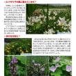 【自然情報紙】八幡平NOW7月2号を発行しました。