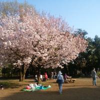 春爛漫から風薫る季節へ/楽しみな可愛子ちゃんアスリートの活躍