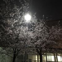 練習後記…4/11