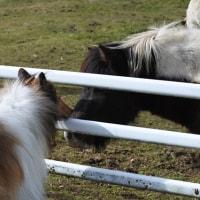 まきば公園でお馬さんとチュー(〃 ̄ー ̄〃)