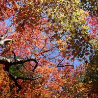 晩秋の老松公園