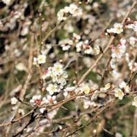 西吉野の春