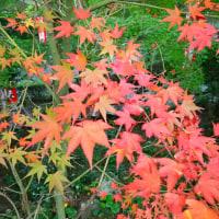 H28年  八面山紅葉