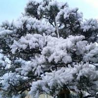 朝方の牡丹雪もここまでかな