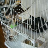 5月12日(金)サクラと保護猫ヒダカ