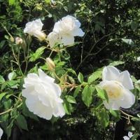6/22(木)のイキメンニュース~少子化・子育て・教育の情報