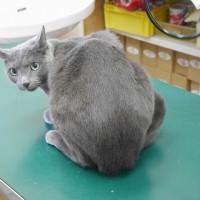 猫の予防接種副作用。