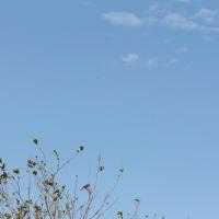 今日は強風・・・そして相変わらずカワセミは残念な結果