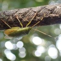『秋の昆虫展』後半のトークセッション間近か