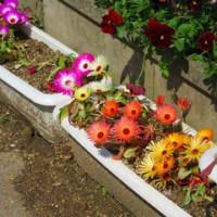 夏秋の花・野菜 発芽の様子