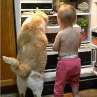 🐱この魚 どうニャン?🐱