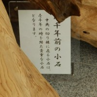 春日大社・国宝殿のカフェ