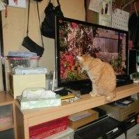 二代目テレビ猫