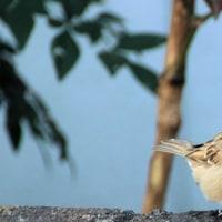 庭に飛んでくる野鳥