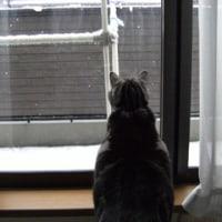 雪の日の思い出。
