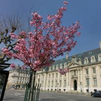 第2389回 Spring in Luxembourg 2017-1