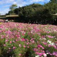 日帰りバス旅行「犬山城・コスモスの花」