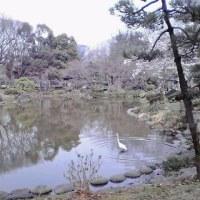 2017   桜 の 頃 の  東 京 日 比 谷 公 園  (3)