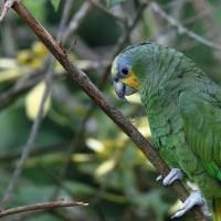 コロンビア探鳥ー17