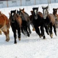 十勝牧場の馬追い・・3