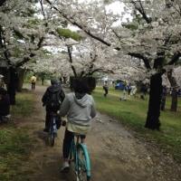 浜寺公園ばら園でお花見🌸