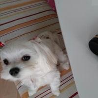 クラッツに合うクラフトビール