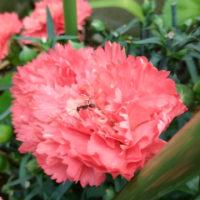 二太郎さん初収穫と今日の庭(*^^*)
