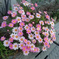 春爛漫花盛り
