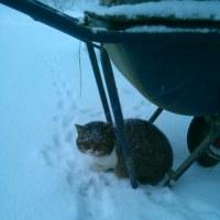 野良猫の雪宿り