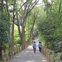 芹沢散歩・明るい樹林の散歩道