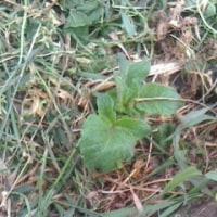 トマト、キュウリ、ナス、エダマメの苗を植えました