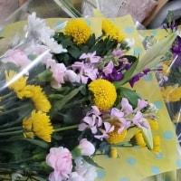 2月25日 明日の誕生花・ゆかりの花 花言葉は?(*^O^*)☆