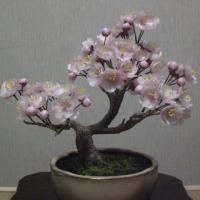 """我が家の桜は""""見ごろ"""""""