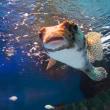 サンシャイン水族館、おとぼけ系