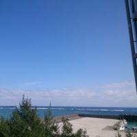抱っこ通信788号  徳之島での空気が気持ちいい
